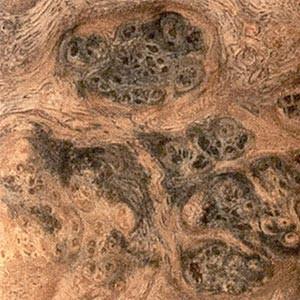 Amboine gris (loupe)