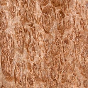 Eucalyptus (loupe)